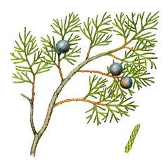 Растения Краснодарского Края Занесенные В Красную Книгу Реферат